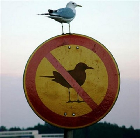 clearly a rebel