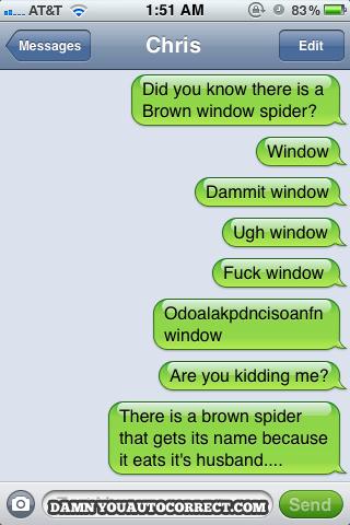 brown window spider